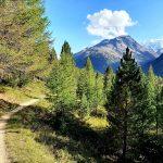 Der versteckte  Flowtrail im Engadin/St.Moritz